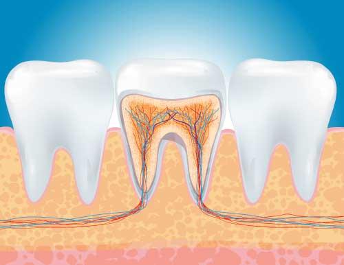 Cosa è l'endodonzia?